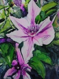 Postkarte_Clematis_Nelly_Moser