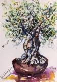 Postkarte_bonsai_de_olivo