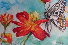 Postkarte_Schmetterling_und_Blume
